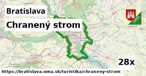 chranený strom v Bratislava
