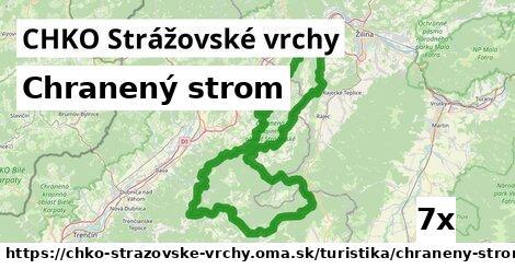 ilustračný obrázok k Chranený strom, CHKO Strážovské vrchy