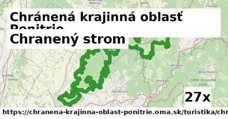 chranený strom v Chránená krajinná oblasť Ponitrie