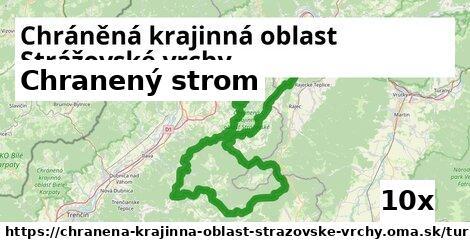 chranený strom v Chráněná krajinná oblast Strážovské vrchy