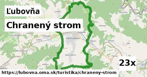 chranený strom v Ľubovňa