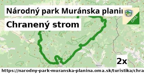 ilustračný obrázok k Chranený strom, Národný park Muránska planina