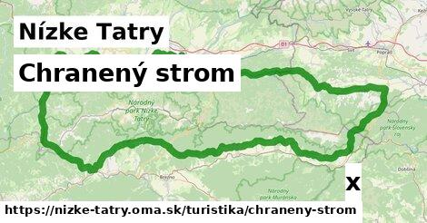 ilustračný obrázok k Chranený strom, Nízke Tatry