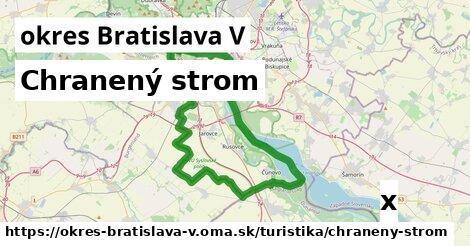 ilustračný obrázok k Chranený strom, okres Bratislava V