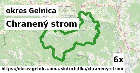 ilustračný obrázok k Chranený strom, okres Gelnica