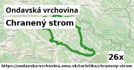 ilustračný obrázok k Chranený strom, Ondavská vrchovina