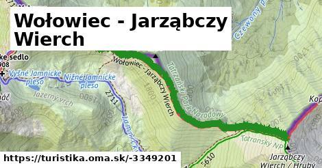 ilustračný obrázok k Wołowiec - Jarząbczy Wierch