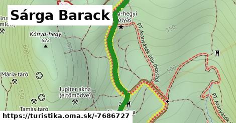 Sárga Barack