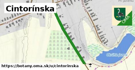 ilustrácia k Cintorínska, Boťany - 378m