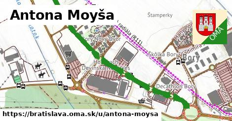 Antona Moyša, Bratislava