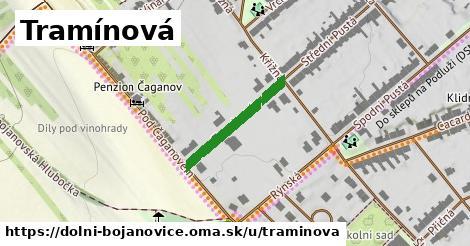 ilustrácia k Tramínová, Dolní Bojanovice - 202m
