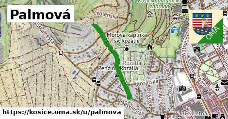 ilustrácia k Palmová, Košice - 555m