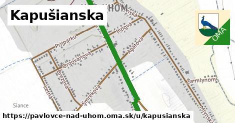 ilustrácia k Kapušianska, Pavlovce nad Uhom - 1,01km