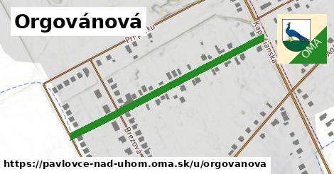 ilustrácia k Orgovánová, Pavlovce nad Uhom - 486m