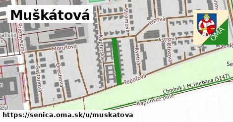ilustrácia k Muškátová, Senica - 145m