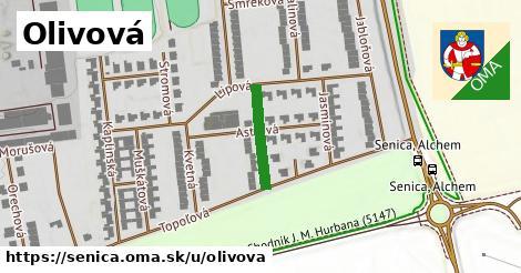 ilustrácia k Olivová, Senica - 148m