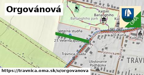 ilustrácia k Orgovánová, Trávnica - 181m