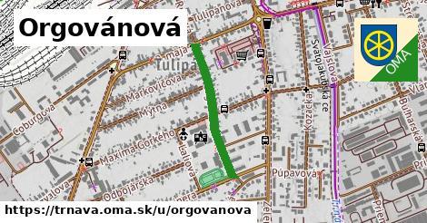 ilustrácia k Orgovánová, Trnava - 492m