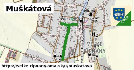 ilustrácia k Muškátová, Veľké Ripňany - 601m