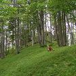 Národná prírodná rezervácia Suchý podla wikipedie