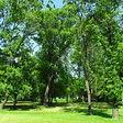 Zoznam kultúrnych pamiatok v obci Svätý Peter podla wikipedie