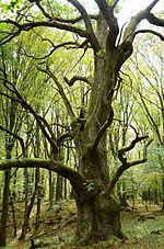 Dolný_vrch, zdroj wikipédia